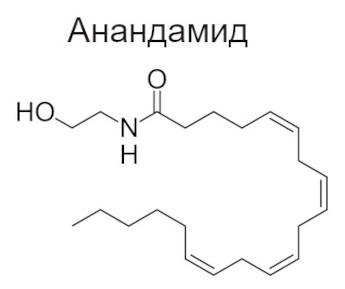 Анандамид