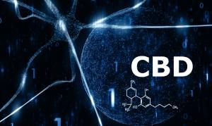 CBD – начин на взаимодействие с рецепторите в тялото и повлияване на различни заболявания